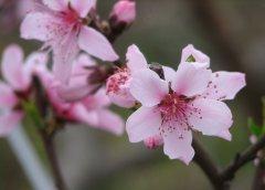 春季滋润脾胃食谱 助
