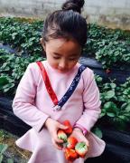 水果采摘商城与您共享